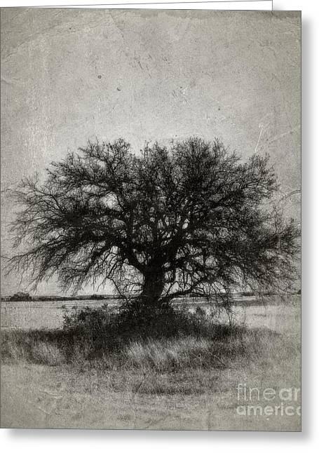 Tree Of Life - No.1958v Greeting Card