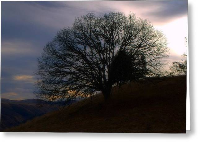 Tree Of Life Greeting Card by Heather L Wright