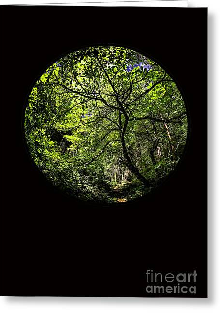Tree Of Life II Greeting Card by Holly Martin