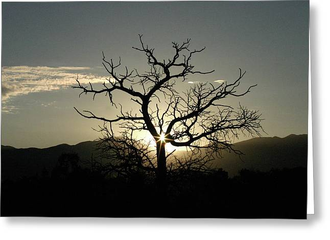Tree Of Light Greeting Card by James Knight