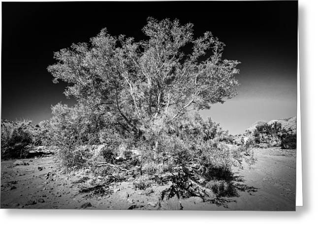 Tree Of The Desert Greeting Card