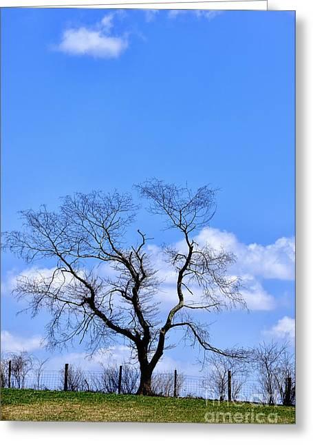 Tree On Fence Line Greeting Card by Thomas R Fletcher