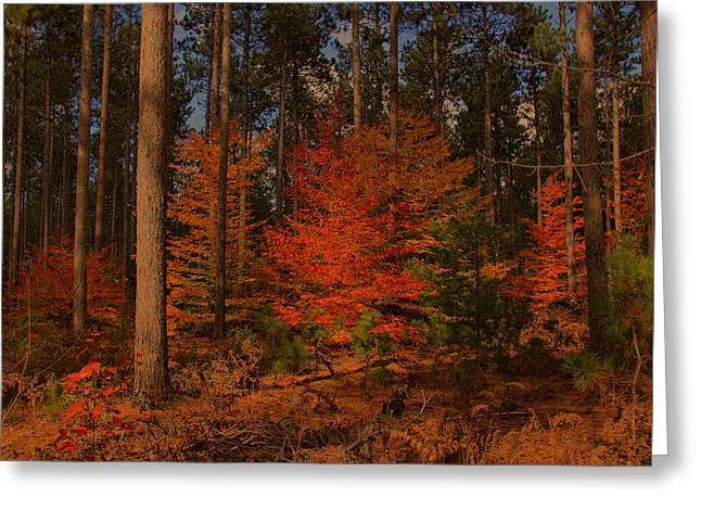 Greeting Card featuring the photograph Tree On Fire by Michaela Preston