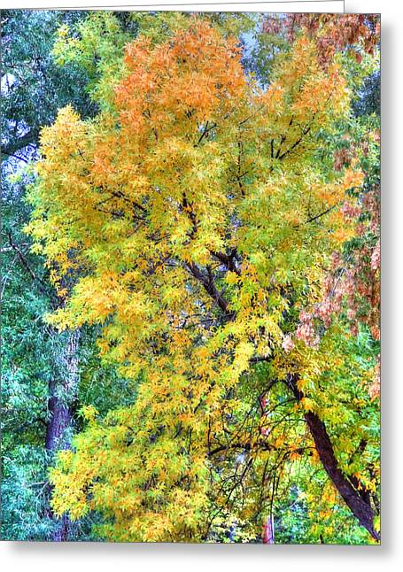 Greeting Card featuring the photograph Tree On Fountain Creek by Lanita Williams