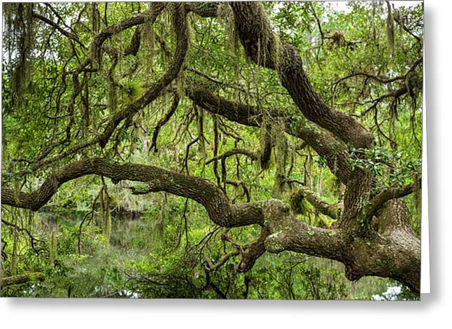 Tree On South Creek In Oscar Scherer Greeting Card by Panoramic Images