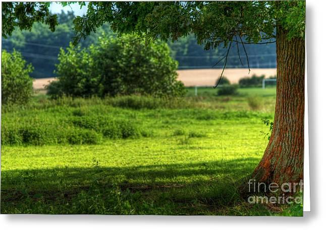 Tree On Summer Field Greeting Card by Michal Bednarek