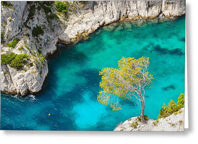 Tree On Turquoise Waters Greeting Card