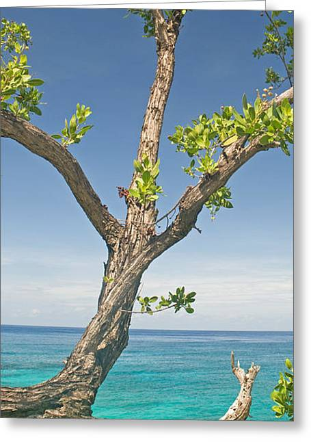 Tree Overhanging Sea At Xtabi Hotel Greeting Card by Panoramic Images