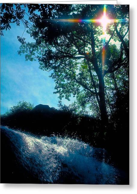Tree Planted By Streams Of Water Greeting Card by Marie Hicks