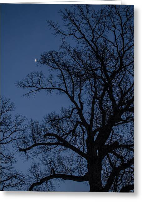 Tree Reaching For The Moon Greeting Card