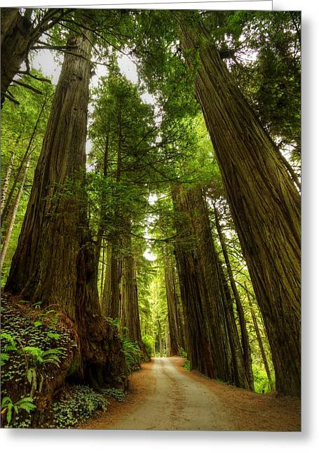 Tree Redwood Ca 3 Greeting Card by John Brueske