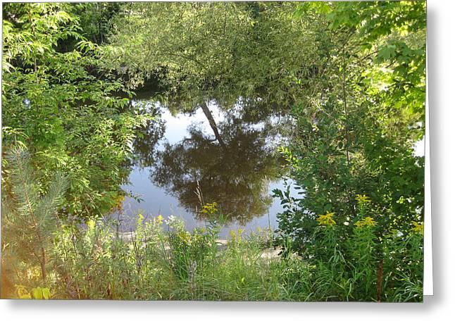 Tree Reflection Greeting Card by Carolyn Reinhart