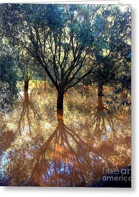 Tree Reflection Greeting Card by Noa Yerushalmi