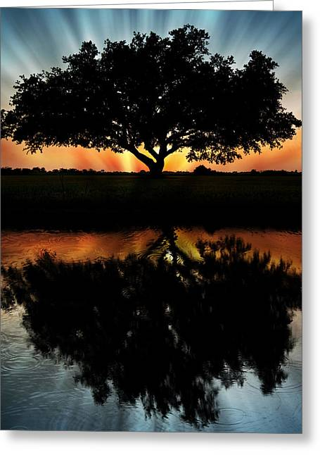 Tree Reflection Greeting Card by Regina  Williams