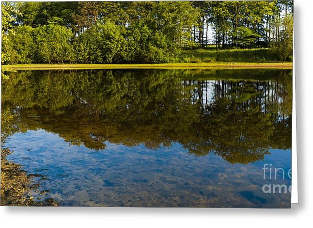 Tree Reflections Greeting Card by Svetlana Sewell