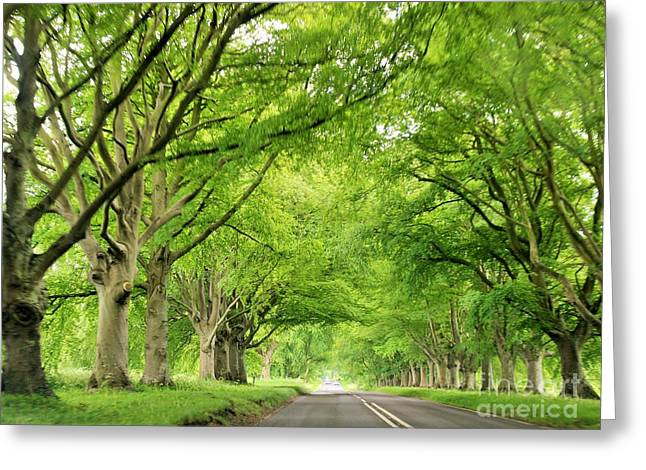 Tree Avenue Greeting Card