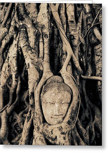 Tree Roots Entwined Around Buddha Greeting Card by Peter Adams