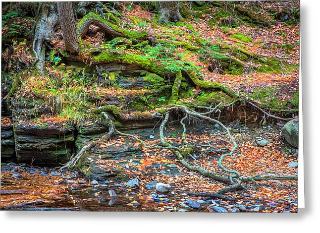 Tree Roots George W Childs National Park Painted   Greeting Card by Rich Franco