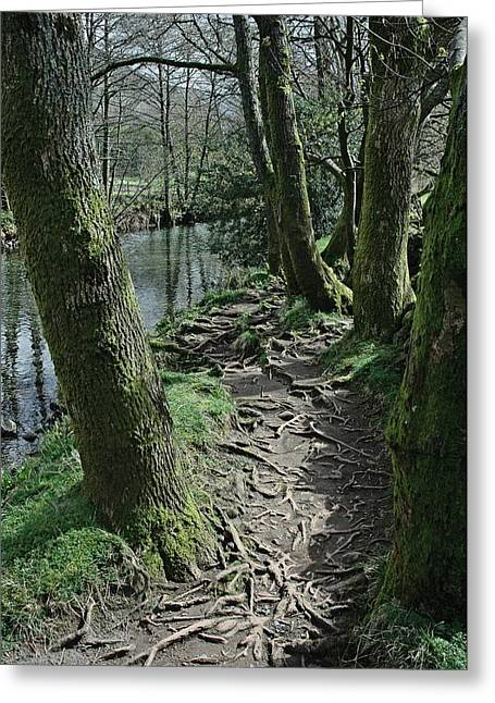 Tree Route Pathway Greeting Card by Kathy Spall
