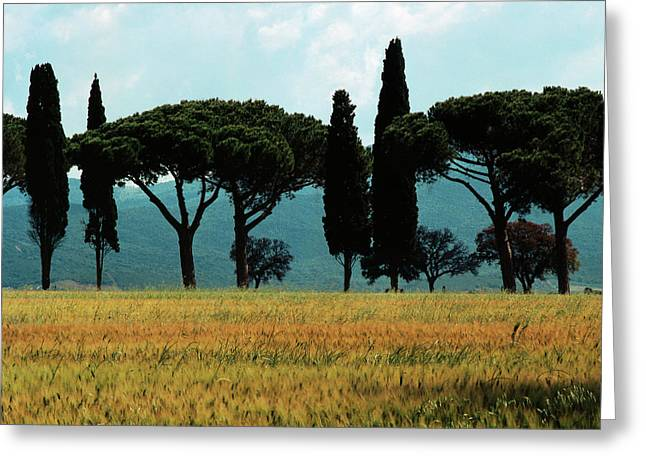 Tree Row In Tuscany Greeting Card by Heiko Koehrer-Wagner