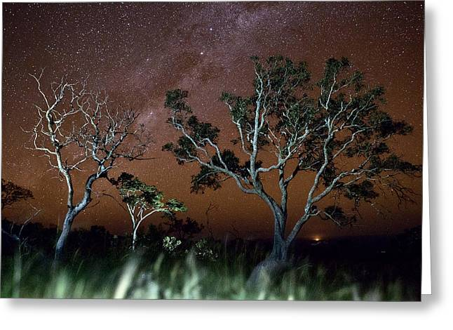 Tree Savanna On The Serrania De Chiquitos Bolivia Greeting Card