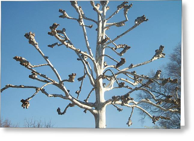 Tree Sculpture Greeting Card by Paula Rountree Bischoff
