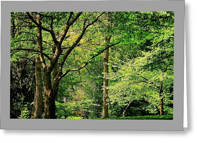 Tree Series 3 Greeting Card