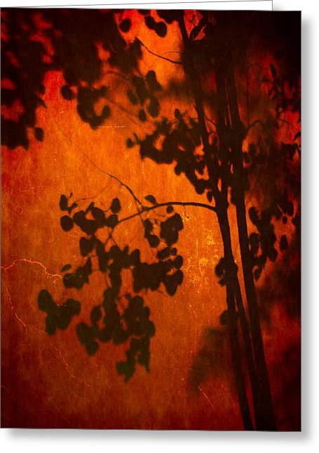 Tree Shadow On Fiery Wall Greeting Card by Dave Garner