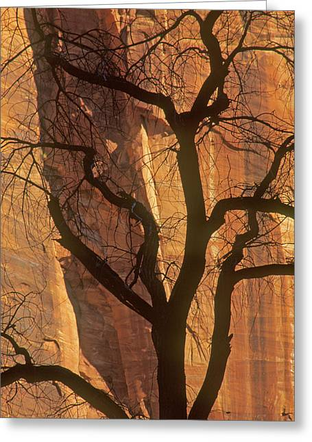 Tree Silhouette Against Sandstone Walls Greeting Card by Judi Baker