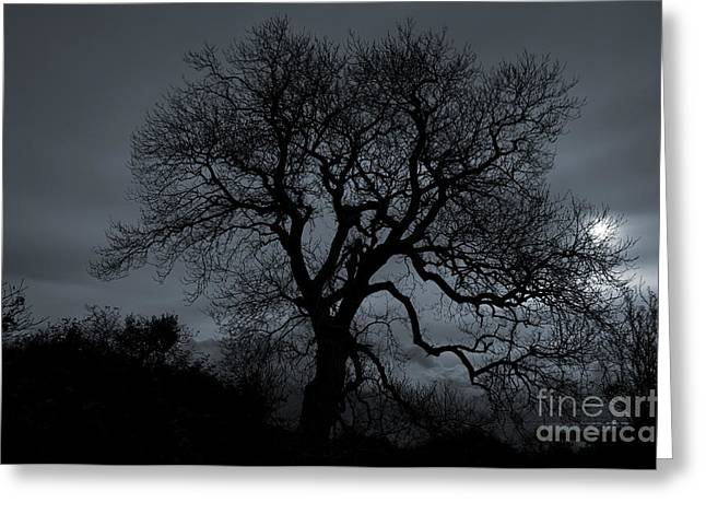 Tree Silhouette Greeting Card by Ian Mitchell