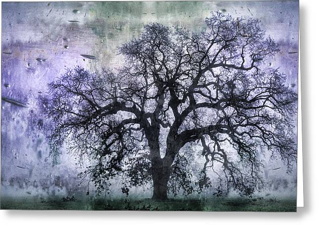 Tree Silhouette In Purple Greeting Card by Carol Leigh