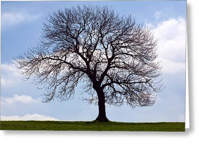 Tree Silhouette Greeting Card by Natalie Kinnear