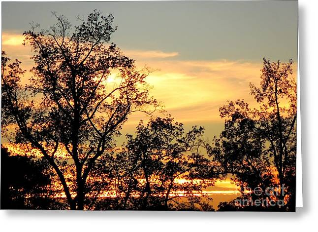 Tree Silhouette With Sunset Greeting Card by Renee Trenholm