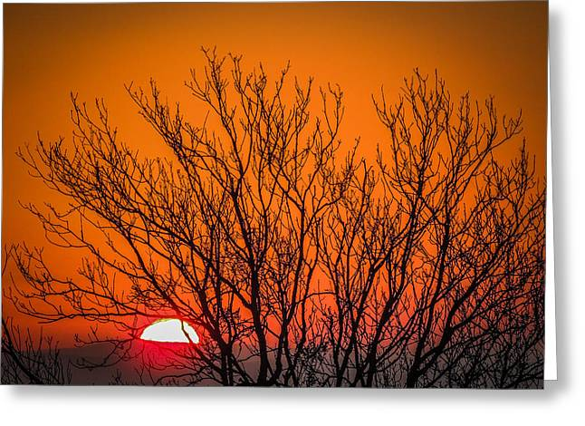 Tree Silhouetted By Irish Sunrise Greeting Card
