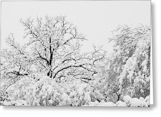 Tree Snow Greeting Card