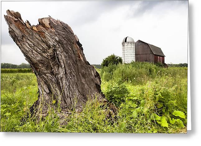 Tree Stump And Barn - New York State Greeting Card