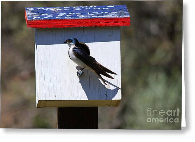 Tree Swallow Home Greeting Card by Mike  Dawson