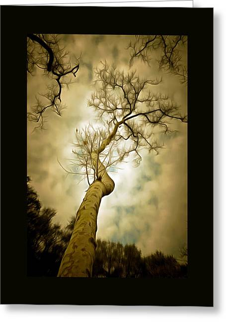 Tree Top In The Clouds Duvet Greeting Card by Barbara Snyder