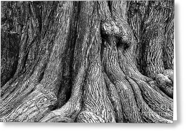 Tree Trunk Closeup Greeting Card