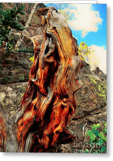 Tree Trunk Greeting Card by Kathleen Struckle