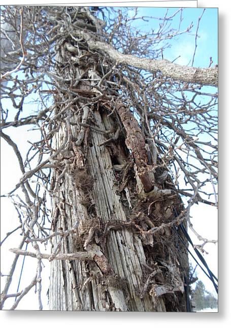 Tree Vines Greeting Card by Jenna Mengersen