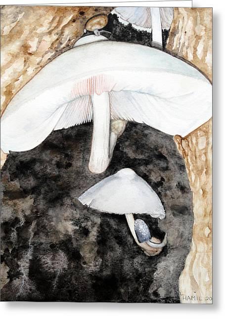 Tree Volvariella Mushroom Greeting Card by Alison Hamil