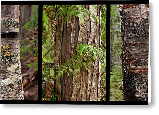 Greeting Card featuring the photograph Tree Wear By Nature by Sandi Mikuse