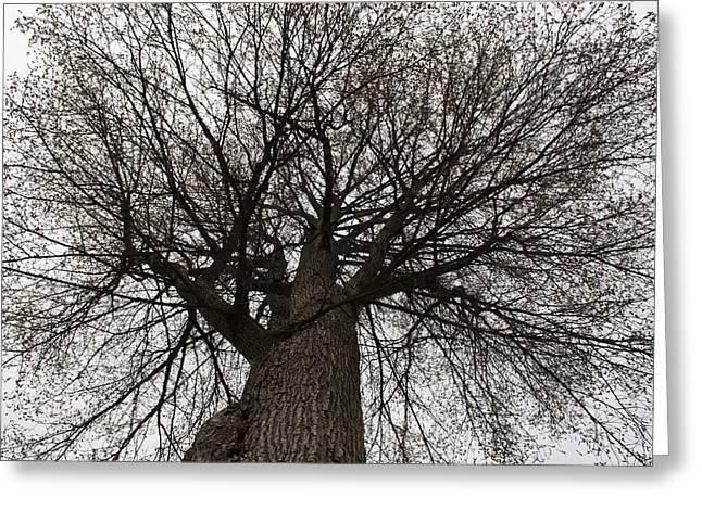 Tree Web Greeting Card