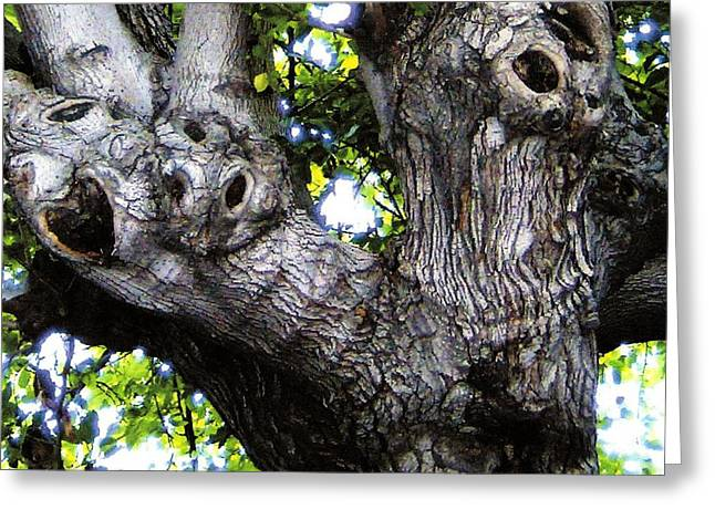 Tree With A Heart Greeting Card by Dan Twyman