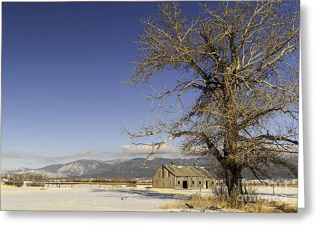 Greeting Card featuring the photograph Tree With Barn by Sue Smith