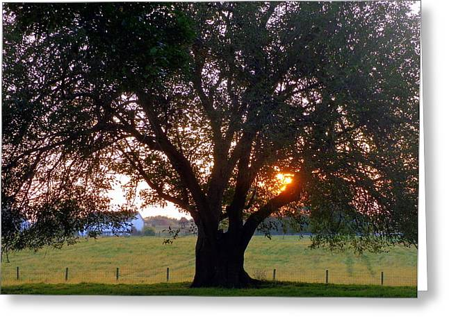 Tree With Fence. Greeting Card by Joseph Skompski