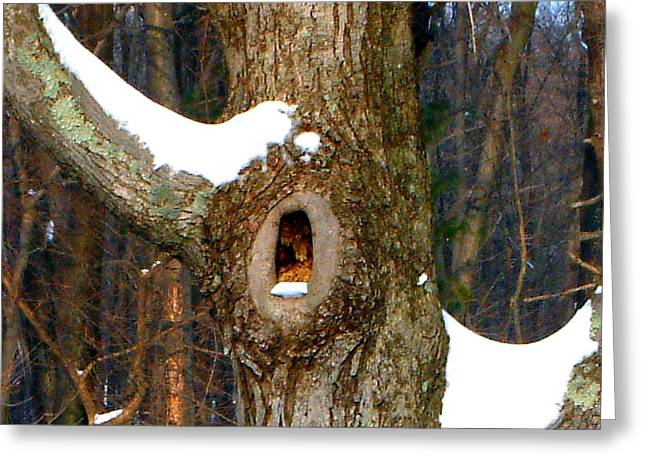 Tree With Snow Greeting Card