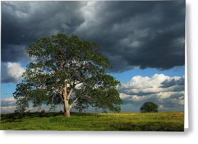 Tree With Storm Clouds Greeting Card