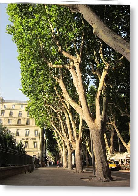 Treed Avenue Greeting Card by Pema Hou